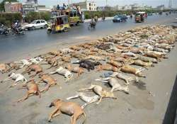 Stray Dogs, Locals, Kerala, Succumbs