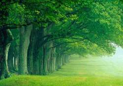 Green spaces, woods good for elderly: Study