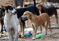 mandya dead baby girl's body dragged by dogs