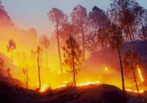 Forest fire ,Uttarakhand- India Tv
