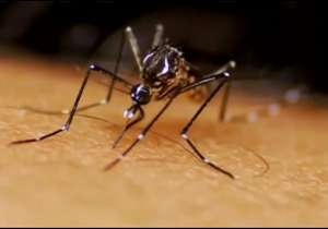 Zika Virus- India Tv