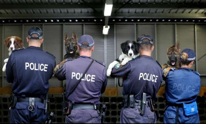 NSW police posts are so hilarious you'll feel like