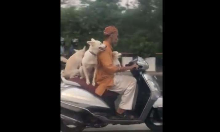 delhi man three dogs on scooter viral video