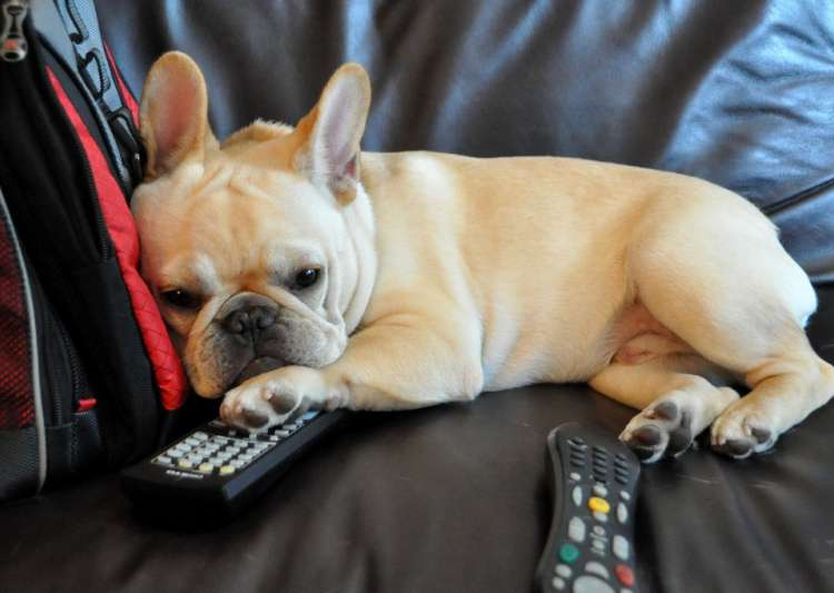 pet friendly remote introduced for TV- India Tv