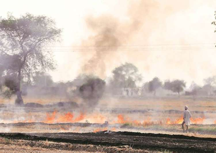 File pic - Burning of paddy stubbles have already begun- India Tv