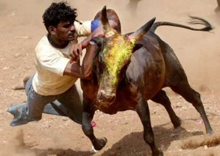 Jallikattu- India Tv