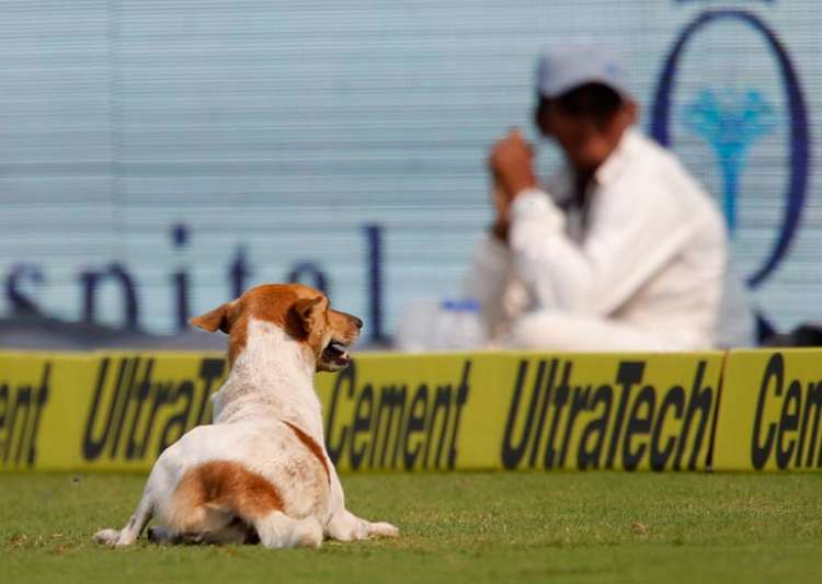 India vs England, Dog, Vizag, Twitter, Vizag Dog- India Tv