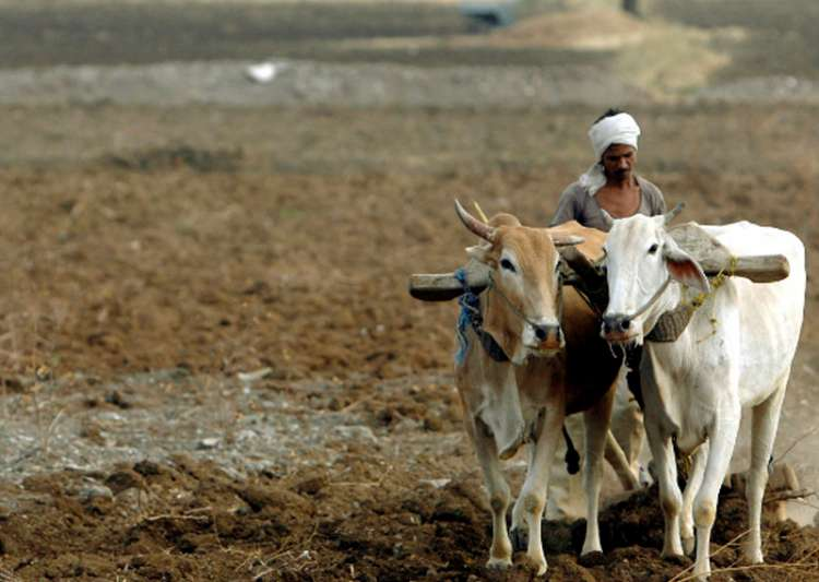389 farmers committed suicide in Maharashtra this year:- India Tv