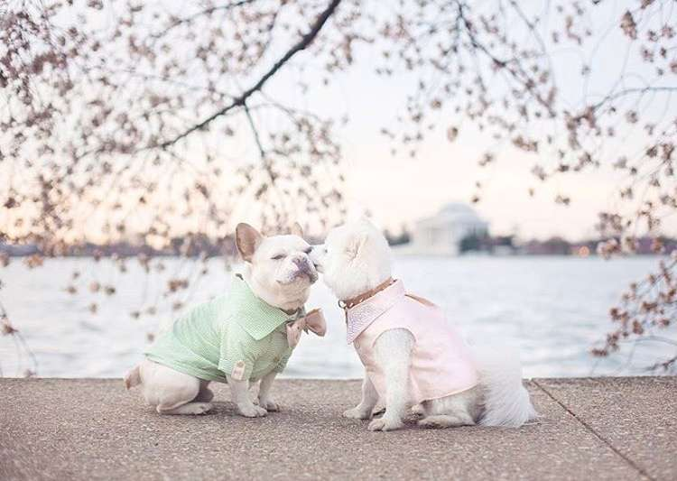 This dog couple's 'Engagement Photoshoot' will melt- India Tv