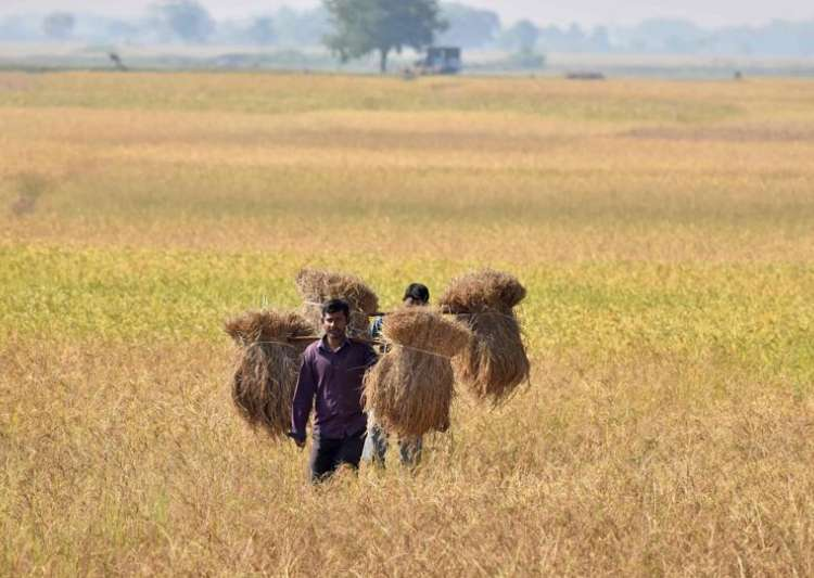 Analysts see farm loan waivers touching 2 per cent of GDP- India Tv