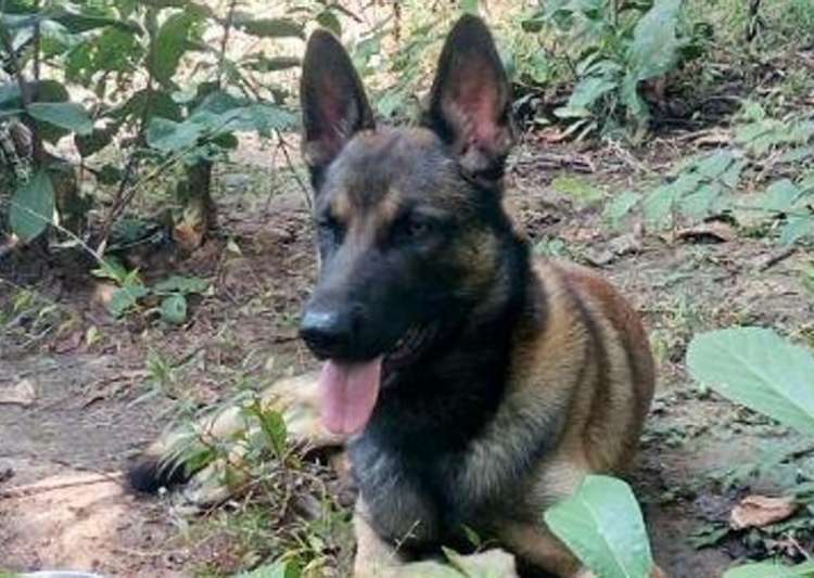 CRPF sniffer dog 'Cracker' dies in Maoist triggered IED- India Tv