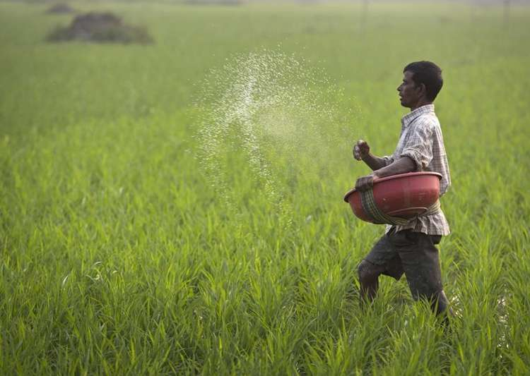 GST Council cuts tax rate on fertiliser to 5 per cent- India Tv