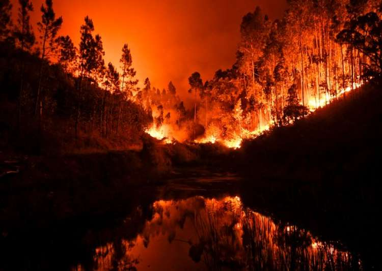 57 dead, 60 injured as forest fire rages in Portugal