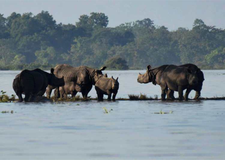 38 per cent of the Kaziranga National Park is submerged