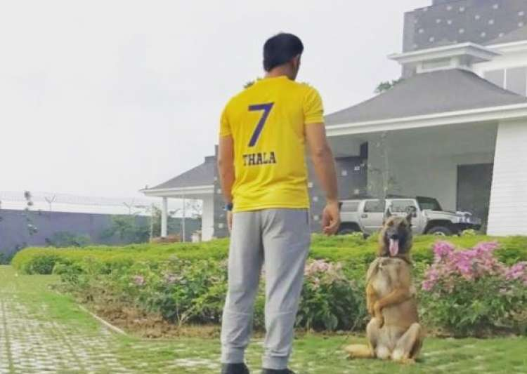 Chennai Super Kings- India Tv