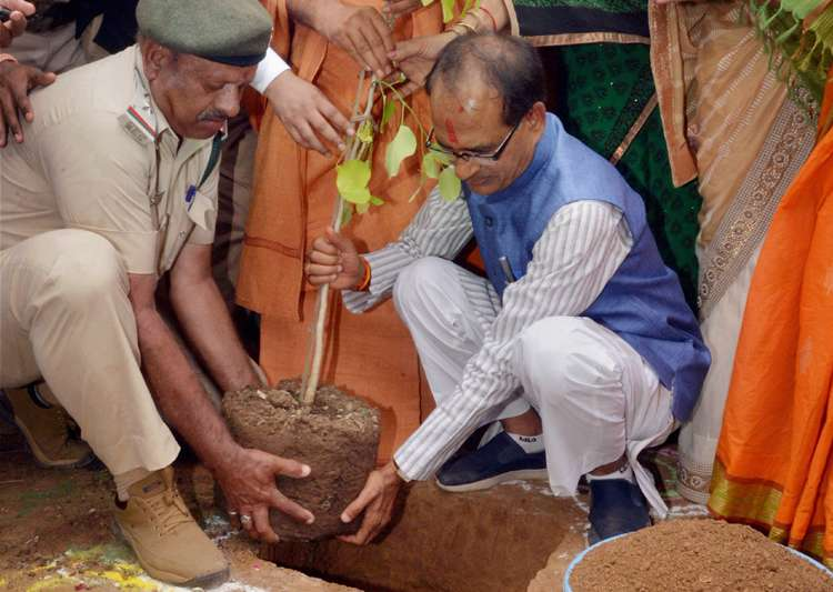 MP eyes Guinness World Record by planting 6 crore saplings