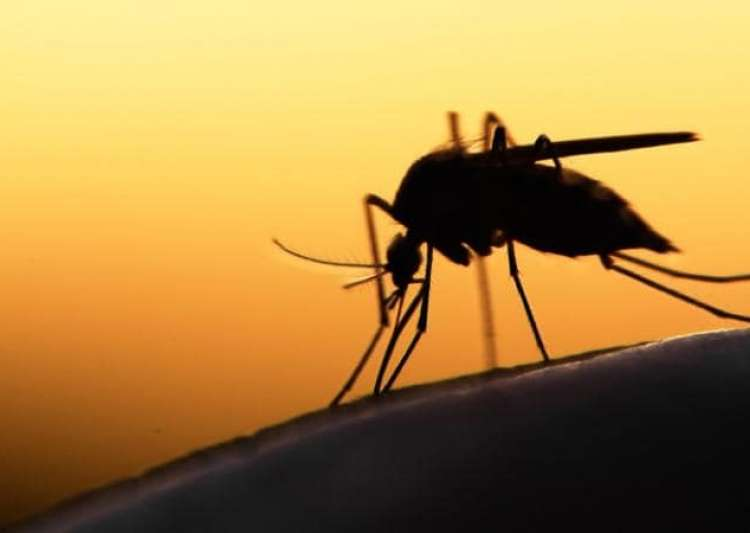 zika affected by dengue- India Tv