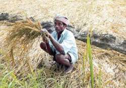 in a relief for farmers rbi asks banks to extend loan
