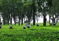 tea board soon to prepare draft amendment of tea act