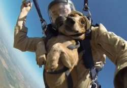 simply amazing dog skydives with owner from 13000 feet