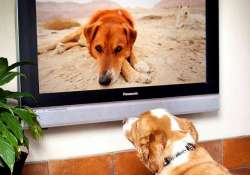 worried about leaving your dog alone switch on dogtv