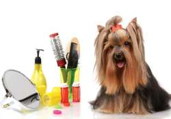 best grooming parlours for your pets