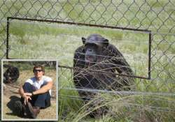us man mauled by chimps in africa remains sedated