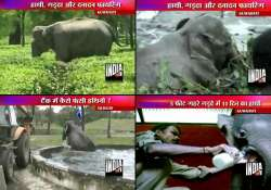 exciting videos of elephants rescue in assam bengal