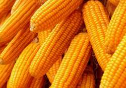 four myths about corn you should stop believing