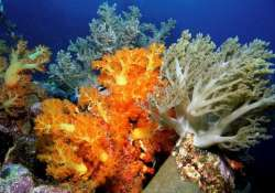 india s first coral garden to be set up in gujarat