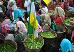 tri partite agreement on tea garden workers wage hike