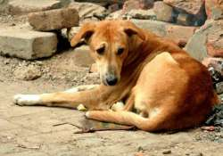 youth held for sexually abusing dog in maharashtra