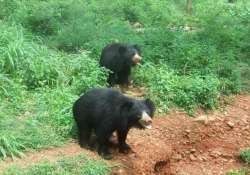 project to restore habitat for sloth bears in jessore