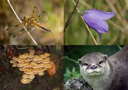 media must convince society about biodiversity say experts