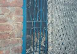 stray leopard enters a house near meerut