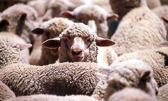 importer in pakistan seeks to stop culling of 20 000