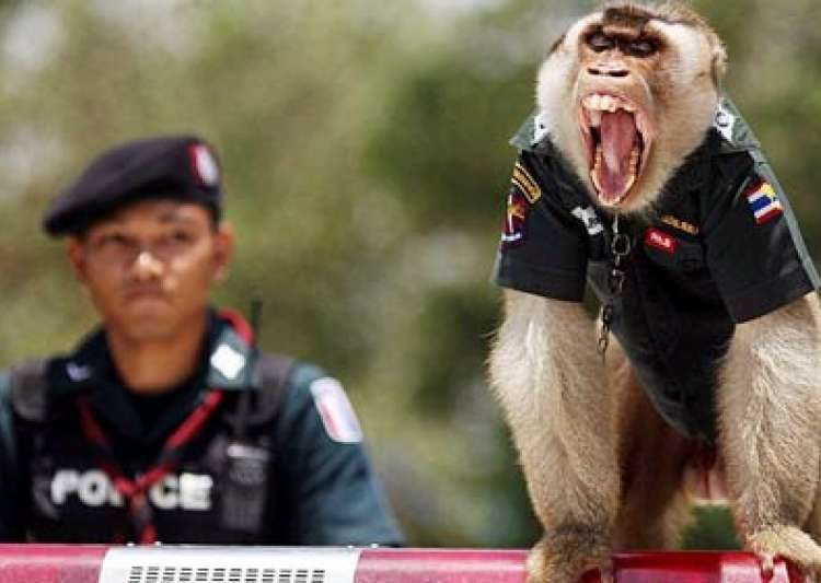 thai monkey wears a police uniform- India Tv