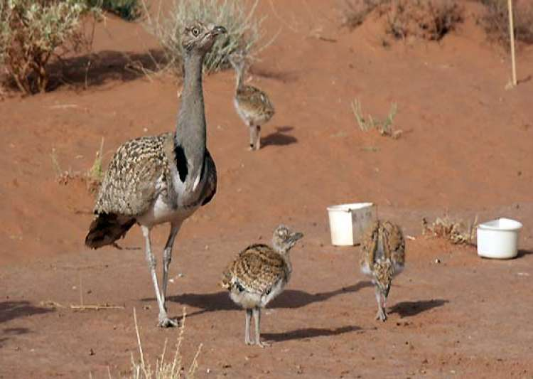 bird hunting creates friction between india pakistan- India Tv
