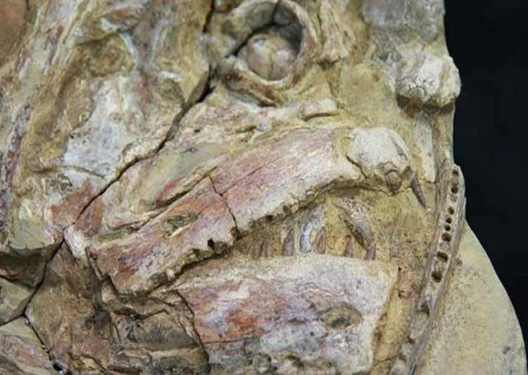 How are fossils dated in Australia