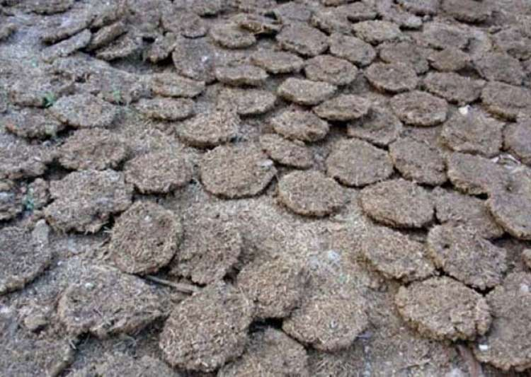 Burning Of Cow Dung Cakes Banned Near Taj Mahal