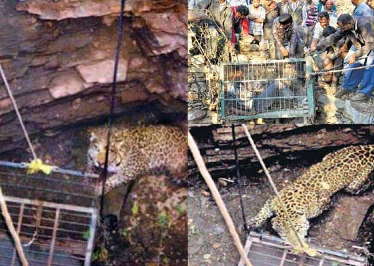 rajasthan wildlife officials trying to rescue trapped- India Tv
