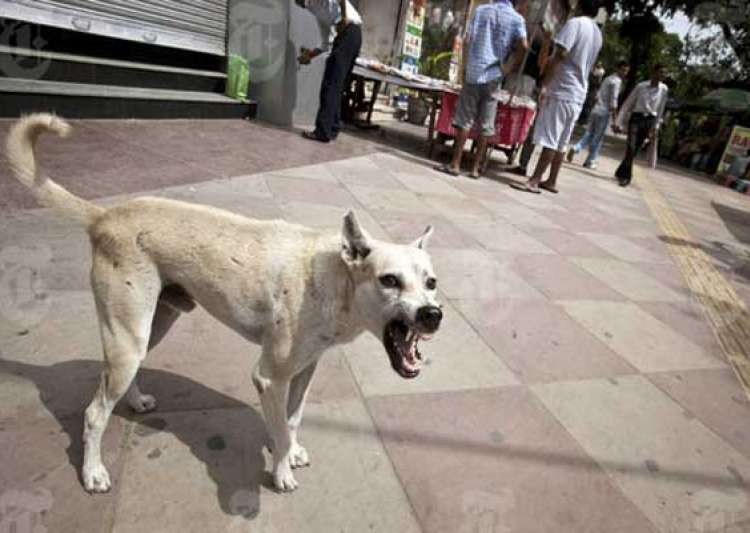 stray dogs maul 6yearold girl to death in mp villagers