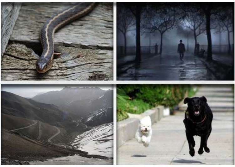 10 most widespread phobias among people- India Tv