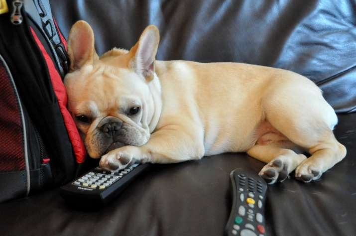 pet friendly remote introduced for TV