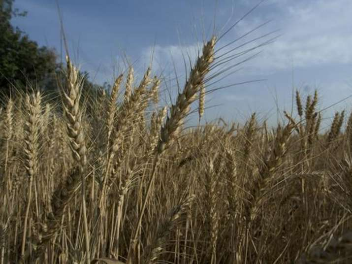 Negligible pre-monsoon rain to boost Rabi crop production,