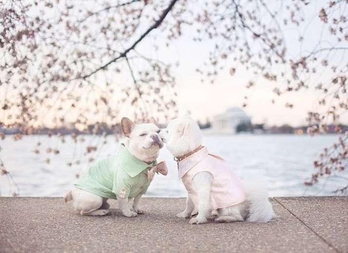 This dog couple's 'Engagement Photoshoot' will melt