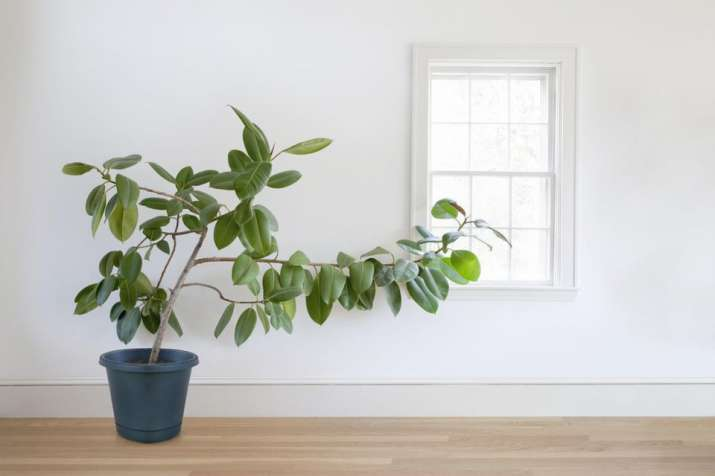 India Tv - These 6 plants will keep your home cool this summer