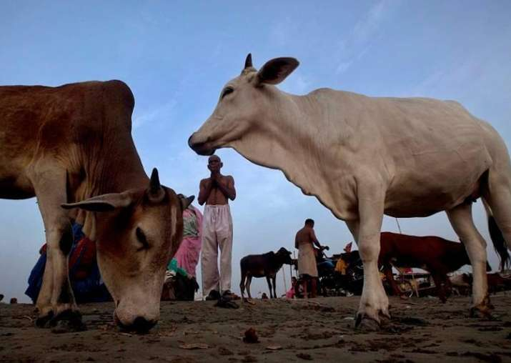 Declare cow as national animal: Gujarat Youth Congress