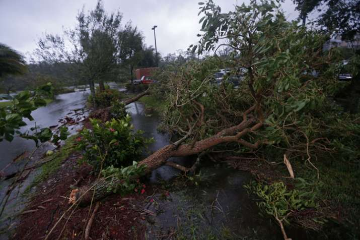 India Tv - Fallen trees are seen during Hurricane Irma, in Fort Myers, Florida