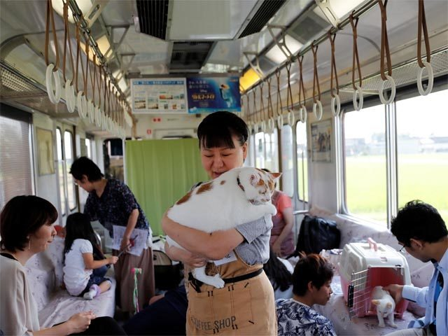 Cat Cafe Train, japan, india